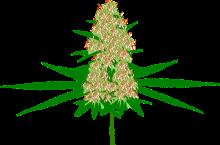 Какие травы лечат псориаз