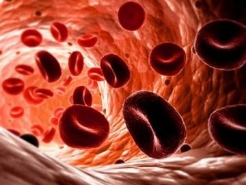eritrocit